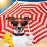 Cortar el pelo de los perros en verano. Es una necesidad