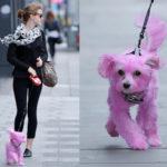 Tintura para perros. Consejos para hacerlo con seguridad.