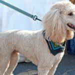 cortes-caninos