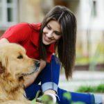curso de estilista canino