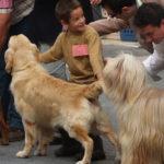 concurso-canino