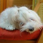 Historia peluqueria canina