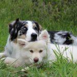 tipos de pelaje canino