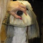 Capacidades profesional de la peluquería canina