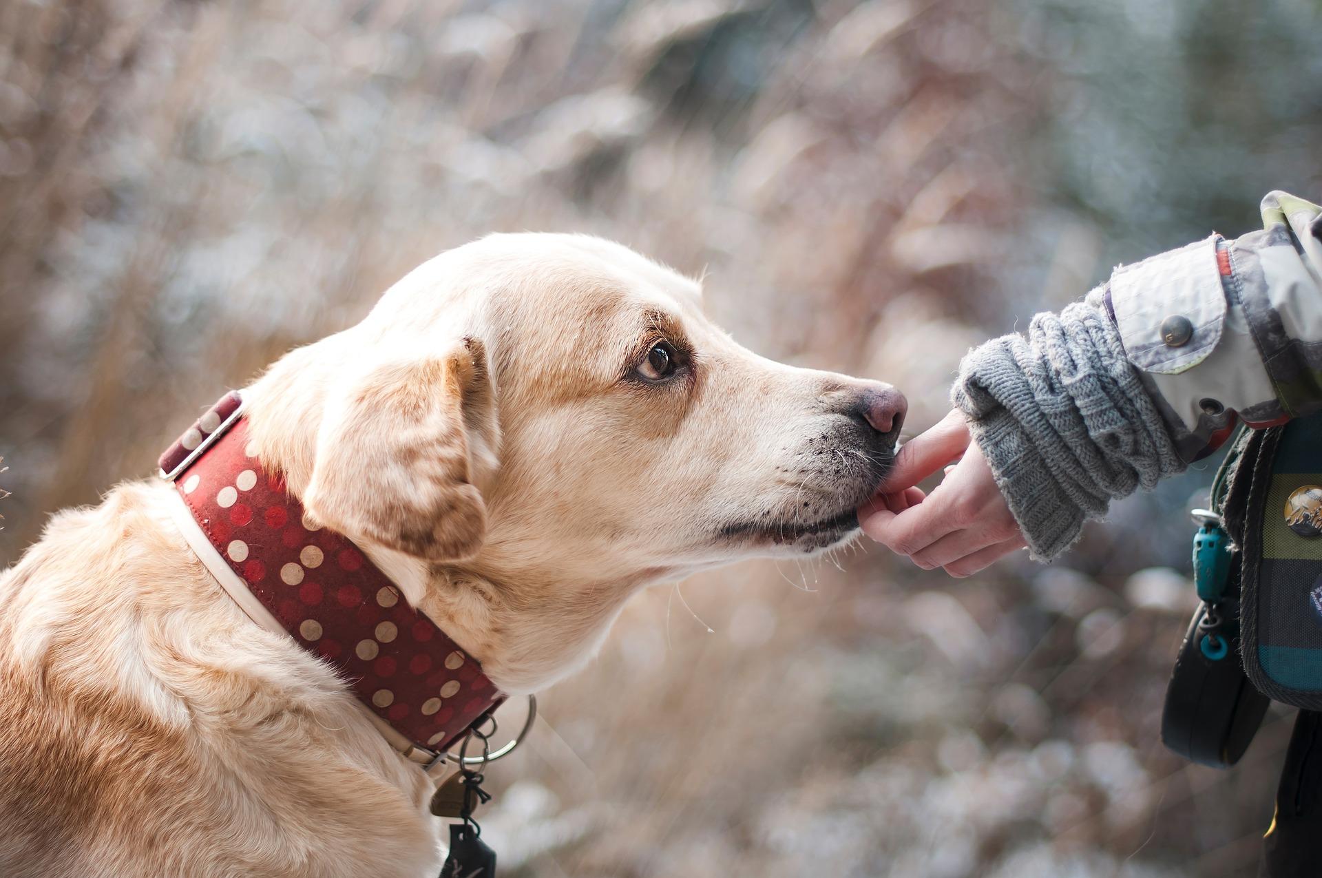 O Dog Hairstyle: Cómo Manejar Perros Nerviosos O Miedosos