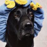 Bañoterapia canina