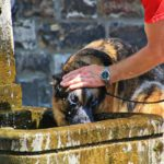 riesgos de rapar al perro