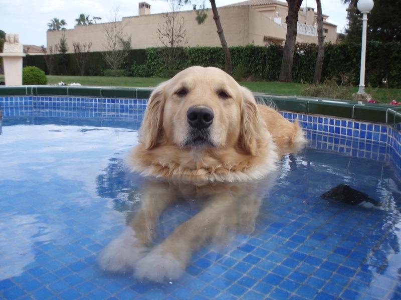 O Dog Hairstyle: Ozonoterapia Y Spa Para Perros