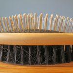 Tipos de cepillos y peines para la peluquería canina