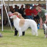 Tipos de exposiciones caninas