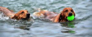 perros y playa