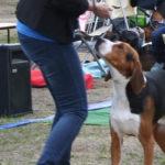 Cómo iniciarse en las exposiciones de belleza canina