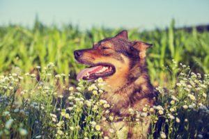 Causas del estrés en la peluquería canina