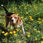 trucos para enseñar a tu perro nuevas experiencias