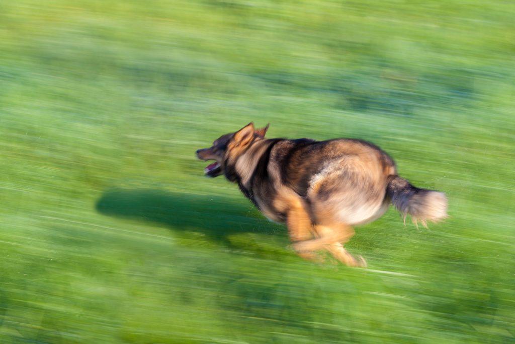 Aprende a hacer deporte con tu perro